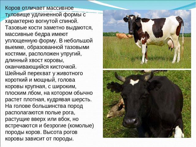 Звуки мычание коровы скачать бесплатно