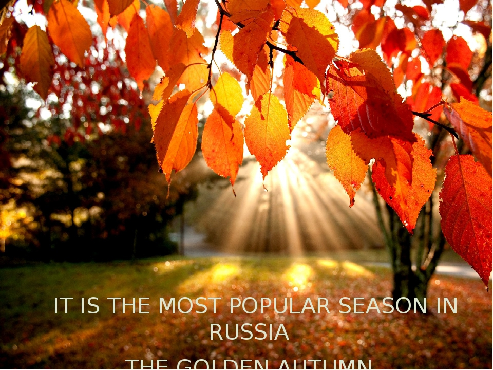 IT IS THE MOST POPULAR SEASON IN RUSSIA THE GOLDEN AUTUMN