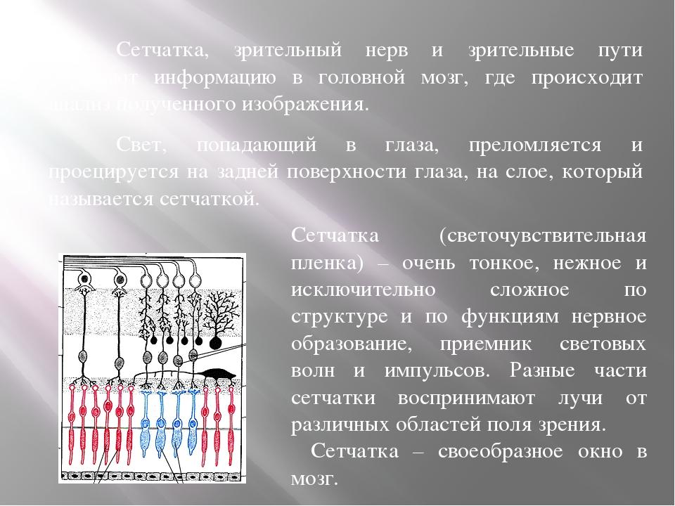Сетчатка, зрительный нерв и зрительные пути передают информацию в головной...