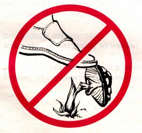 Картинка не топчи грибы