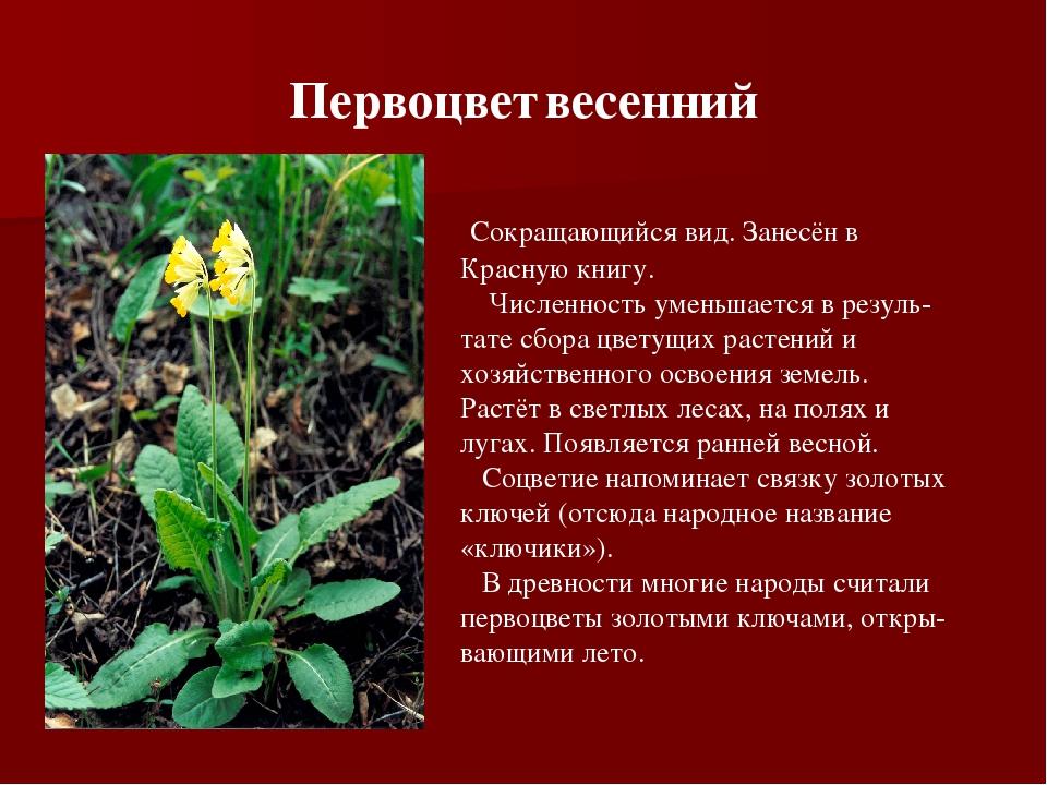 регионам растения в красной книге россии фото и названия нашем