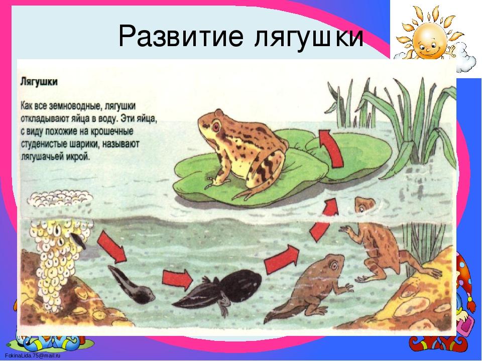 Этапы развития лягушки в картинках, народы россии
