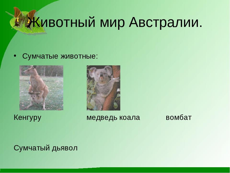Животный мир Австралии. Сумчатые животные: Кенгуру медведь коала вомбат Сумча...