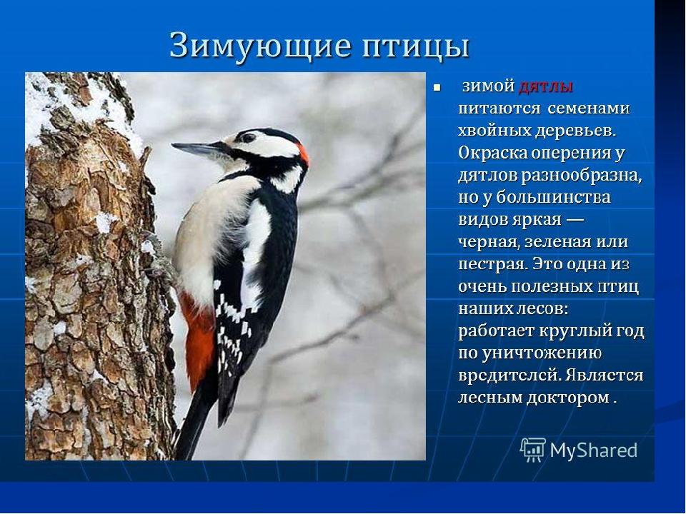 фото и рассказы о птицах мужчин можно по-разному