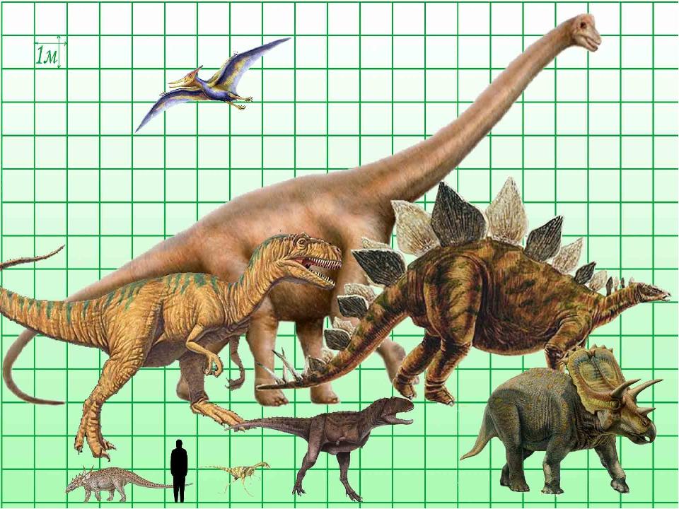 Картинки динозавров и названия этих динозавров