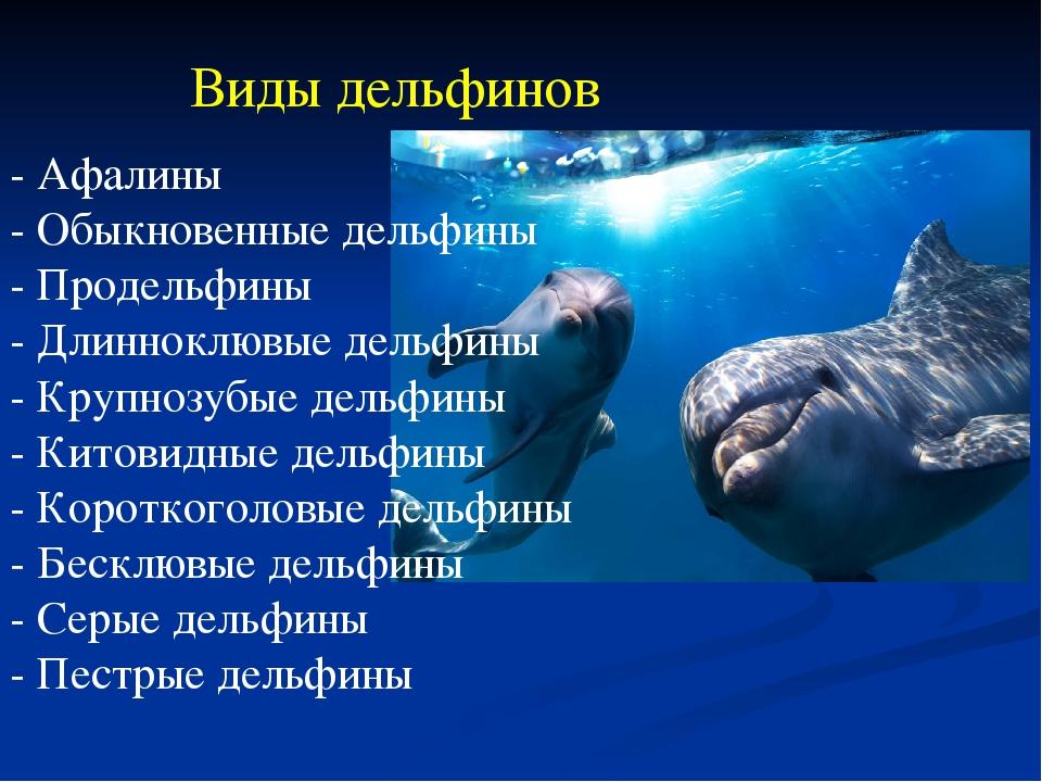 виды дельфинов список и фото дети