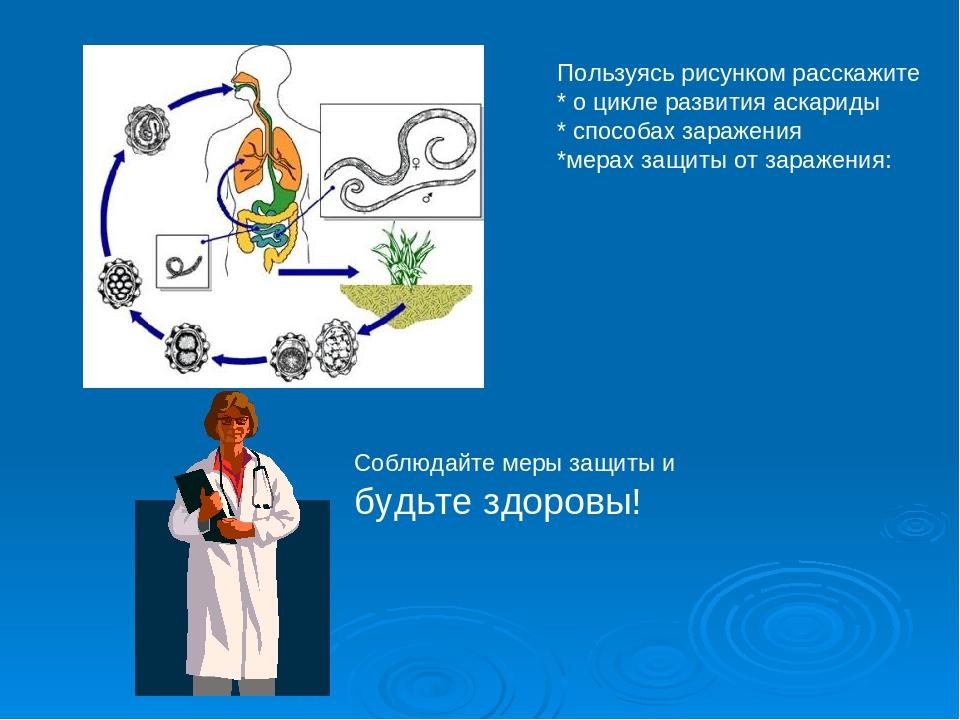 Пользуясь рисунком расскажите * о цикле развития аскариды * способах заражени...