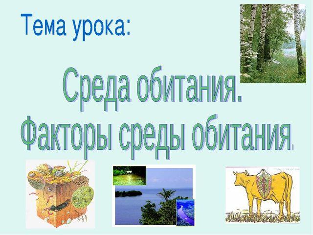 Роль опорных тканей растений для выживания в среде обитания