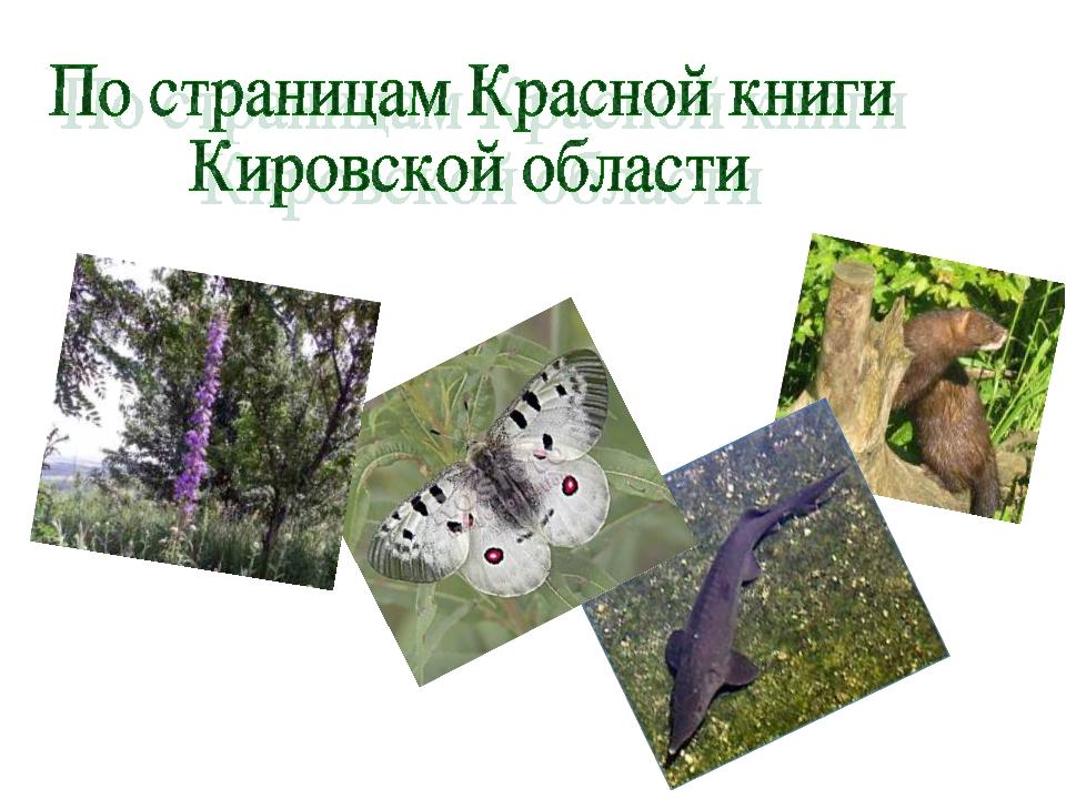 Красная книга кировской области картинка