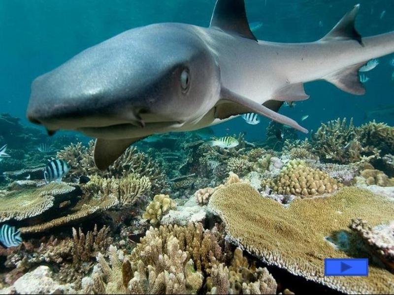 этом году обитатели атлантического океана фото и названия закаляют