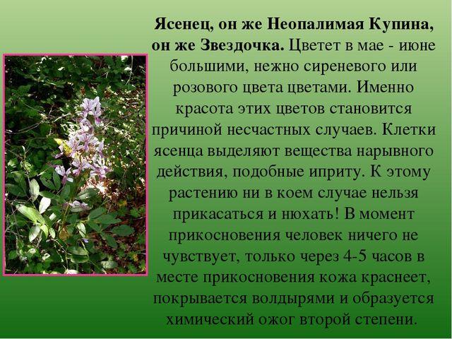 Неопалимая купина цветов