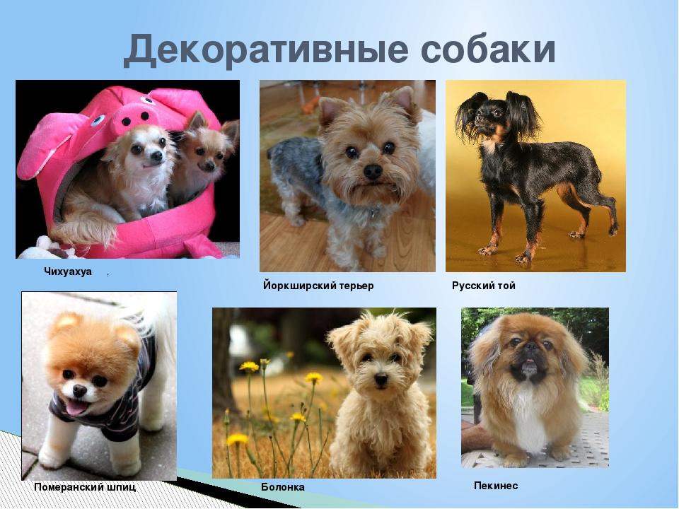 Породы собак с фото и названием и описанием
