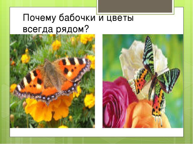 Почему бабочки и цветы всегда рядом?