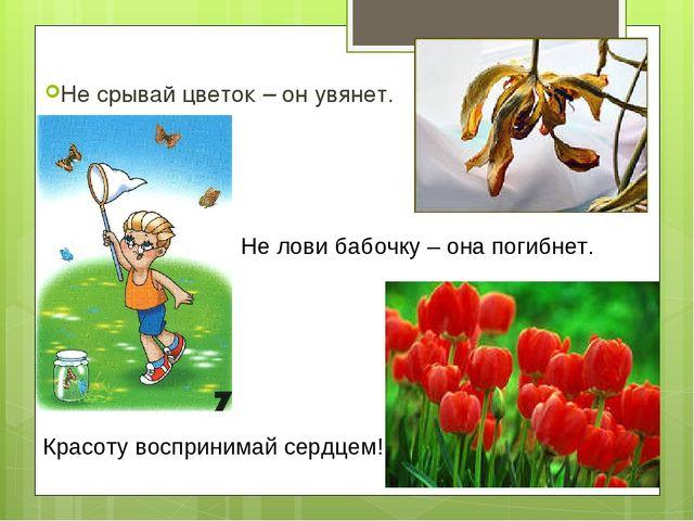 Не срывай цветок – он увянет. Не лови бабочку – она погибнет. Красоту воспри...
