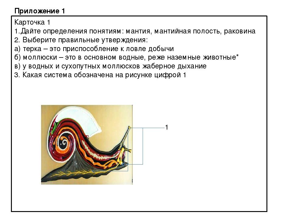 Приложение 1 Карточка 1 1.Дайте определения понятиям: мантия, мантийная полос...