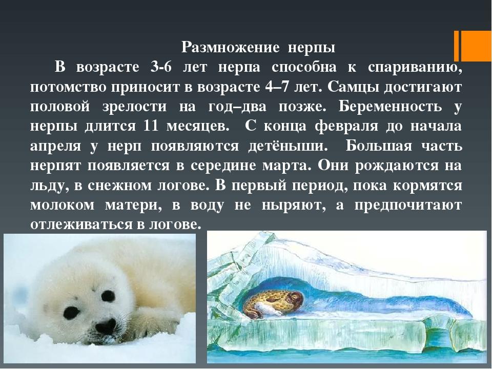 органы размножения у тюленей если кадрам, которые