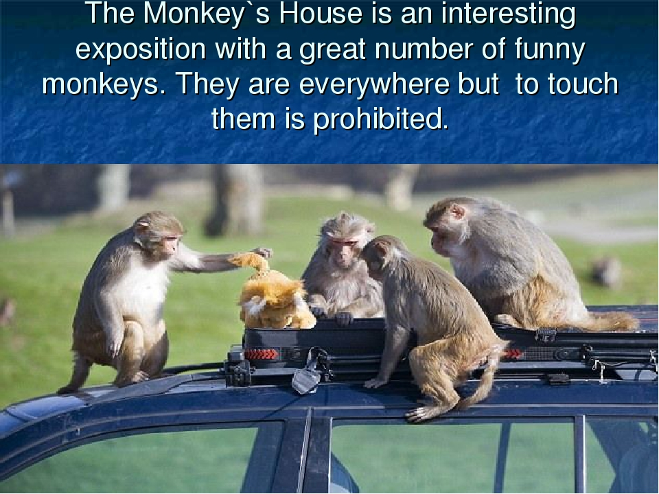The Monkey`s House is an interesting exposition with a great number of funny...