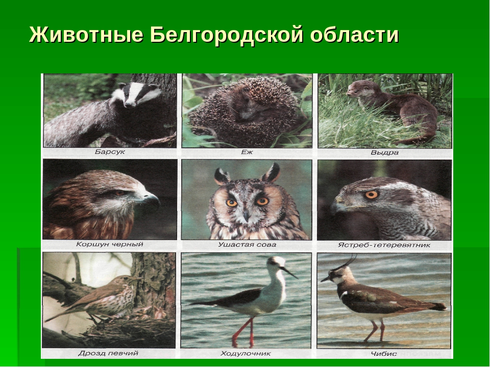 Доклад животные белгородской области 8076