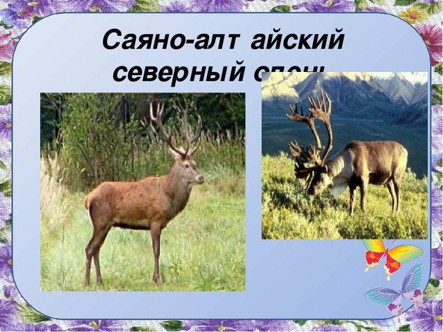 Саяно-алтайский северный олень