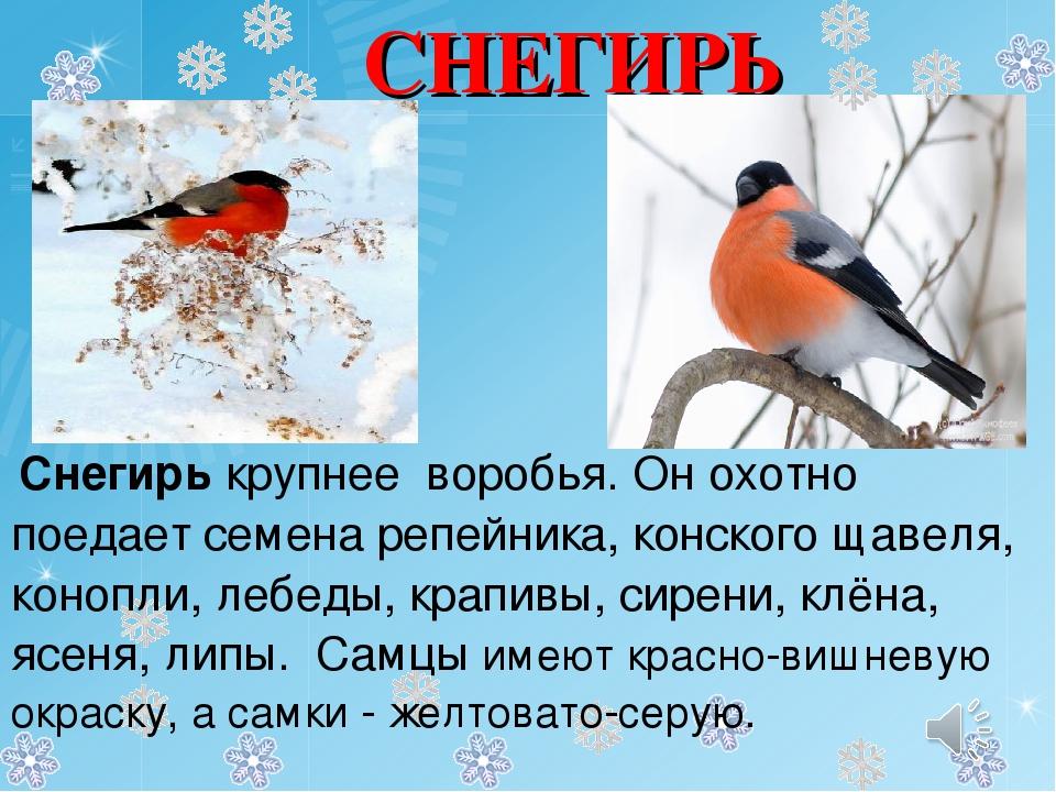 стоя рассказ о снегири с картинками объемные рисунки вязаном