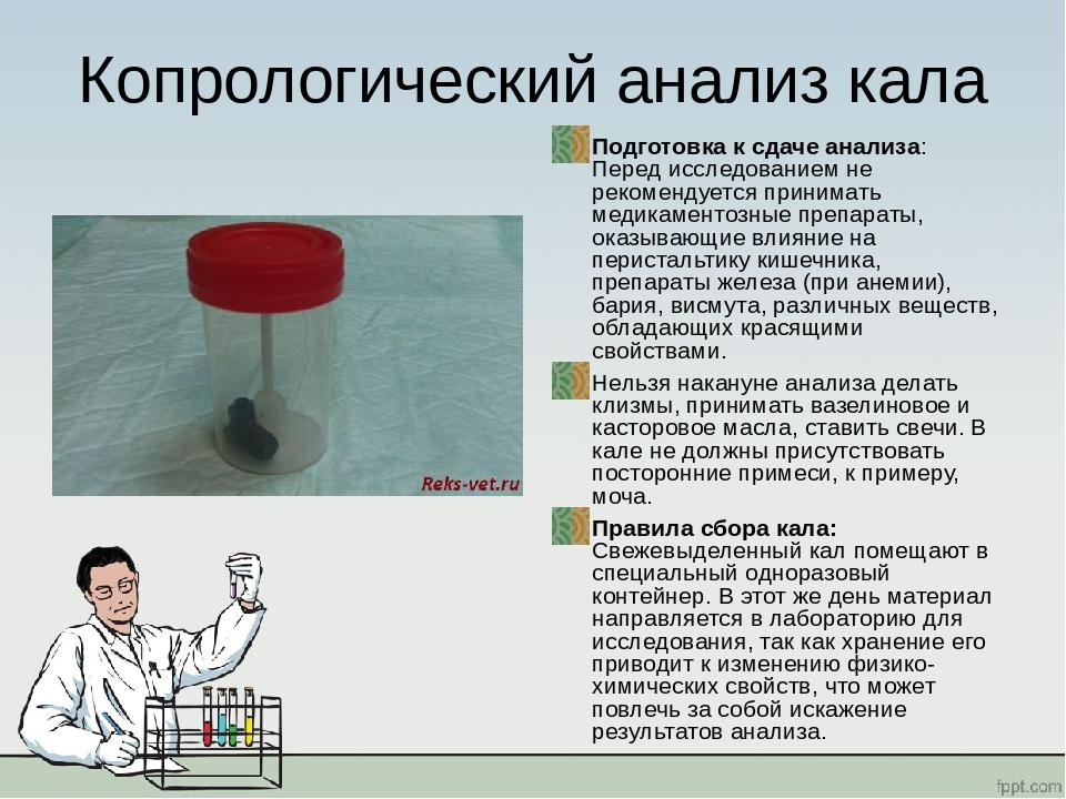 Правила сдачи кала на дисбактериоз