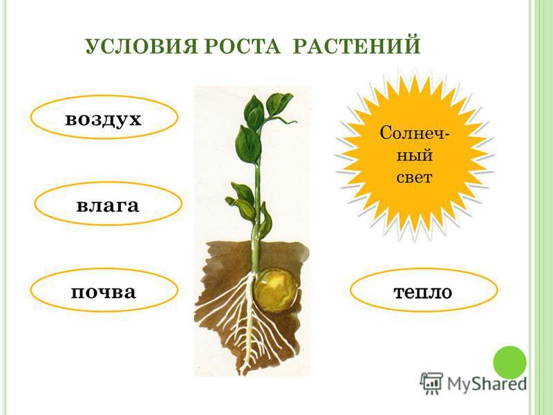 что необходимо растениям для роста в картинках