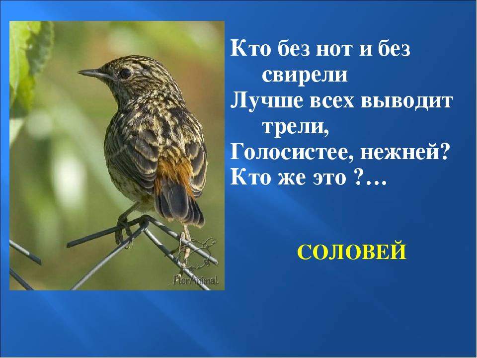 СОЛОВЕЙ Кто без нот и без свирели Лучше всех выводит трели, Голосистее, нежне...
