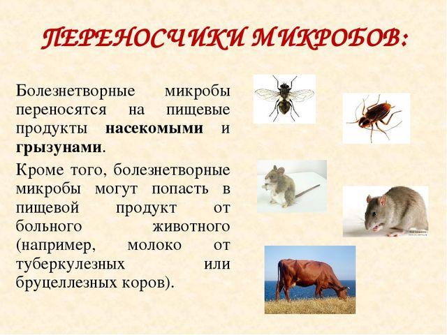 ПЕРЕНОСЧИКИ МИКРОБОВ: Болезнетворные микробы переносятся на пищевые продукты...