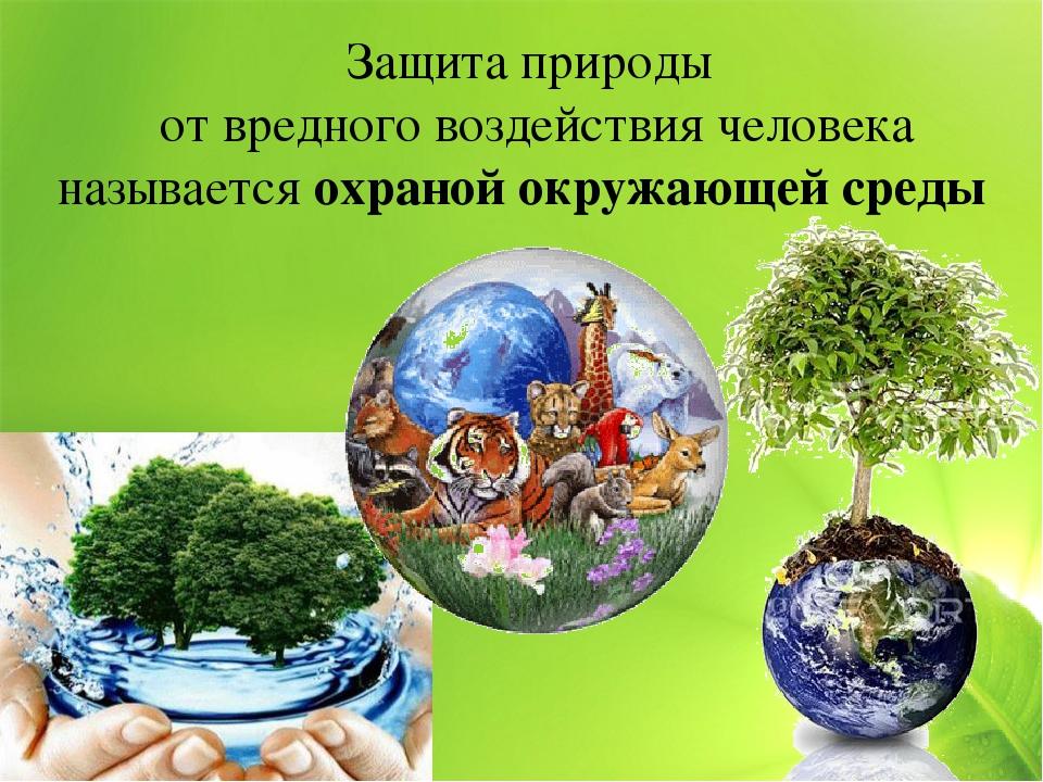 Картинка окружающая среда охрана природы