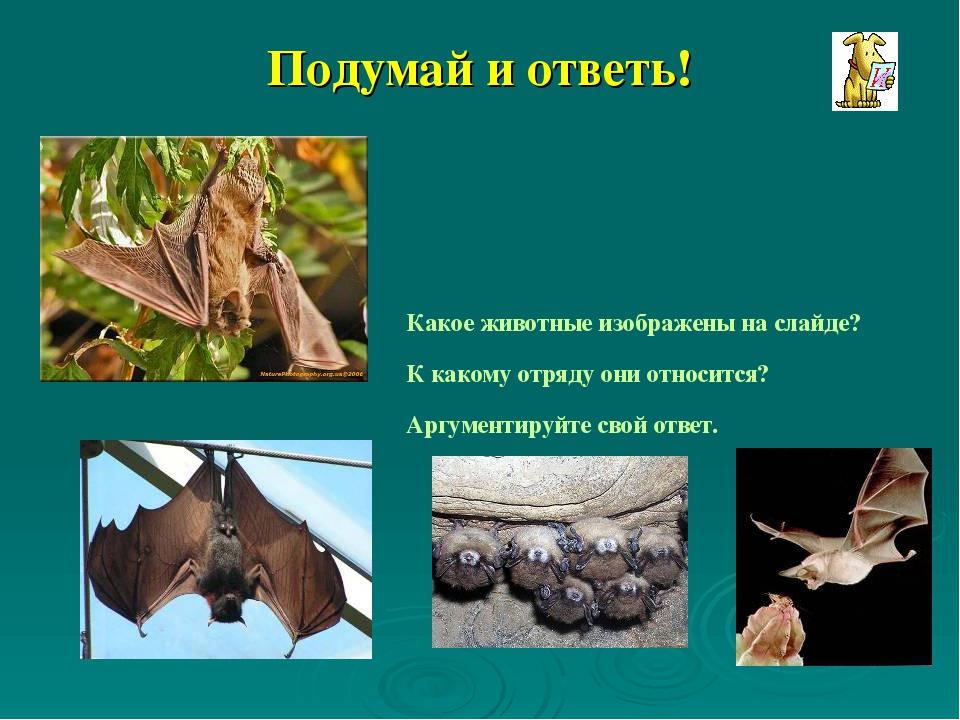 Характеристика отряда чешуйчатых