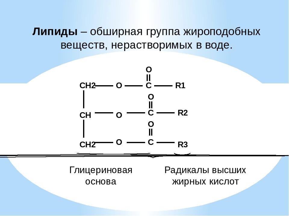 Липиды – обширная группа жироподобных веществ, нерастворимых в воде. Глицерин...
