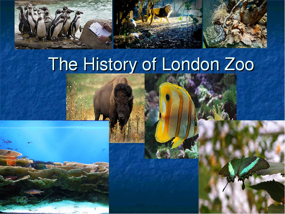 The History of London Zoo