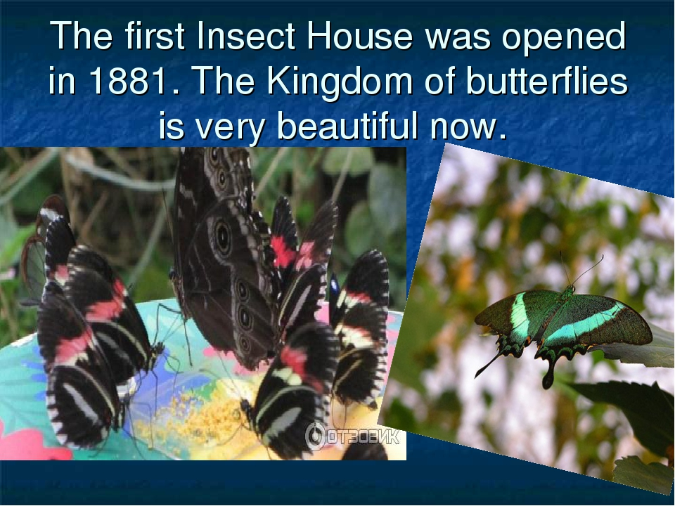 The first Insect House was opened in 1881. The Kingdom of butterflies is very...