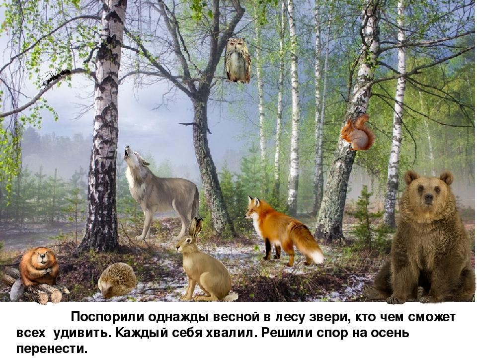 Звери в лесу весной картинки