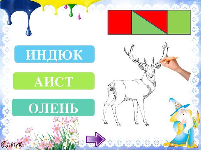 ПЕТУХ ЗЕБРА ЧАЙКА