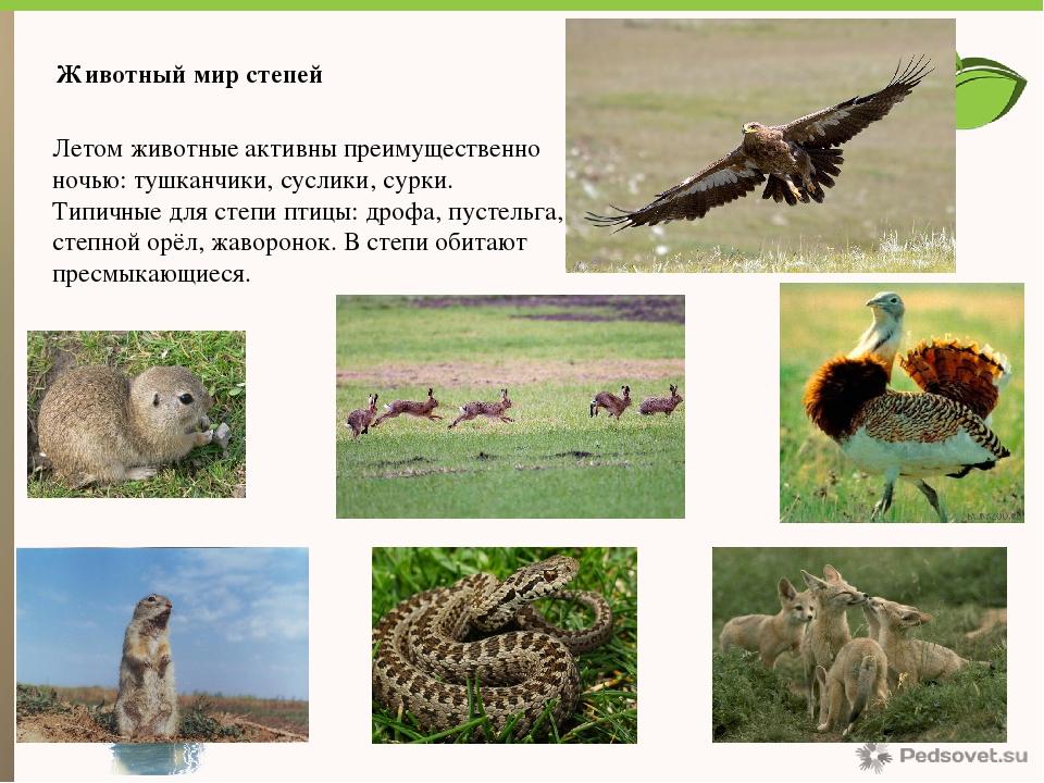 растения и животные степи с картинками чалочные