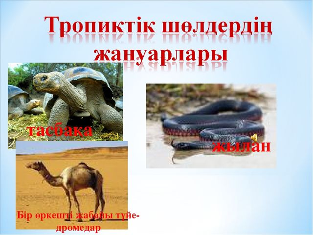 тасбақа жылан Бір өркешті жабайы түйе- дромедар