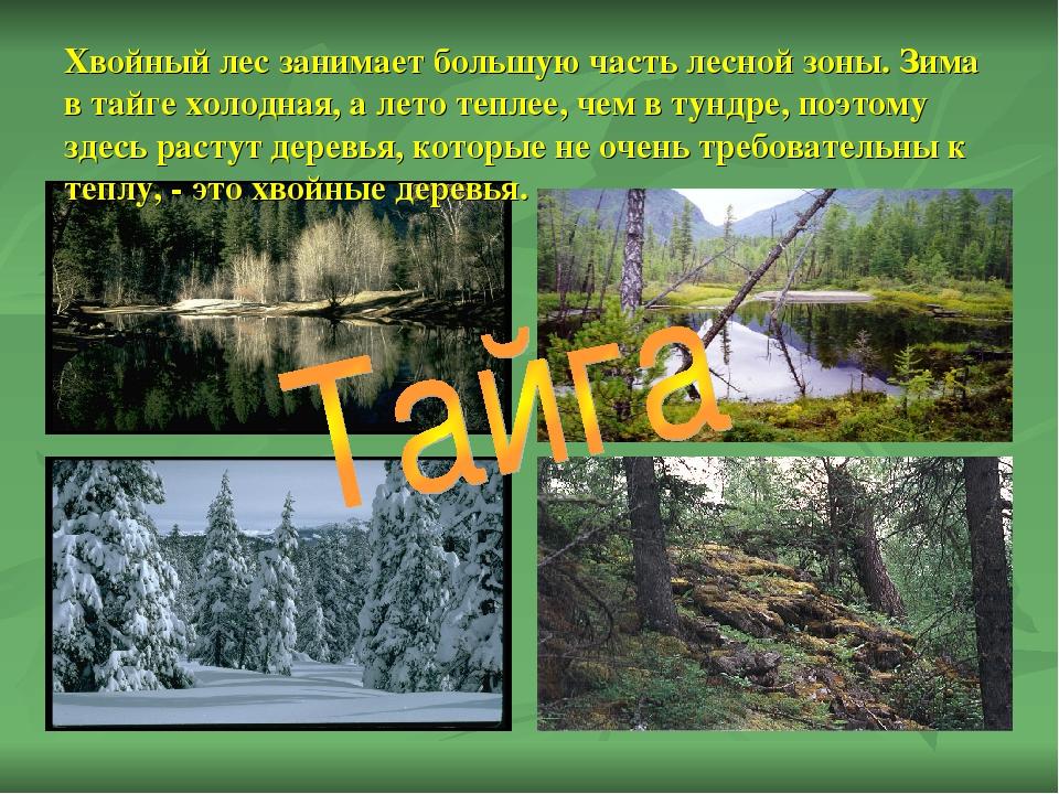 Хвойный лес занимает большую часть лесной зоны. Зима в тайге холодная, а лето...
