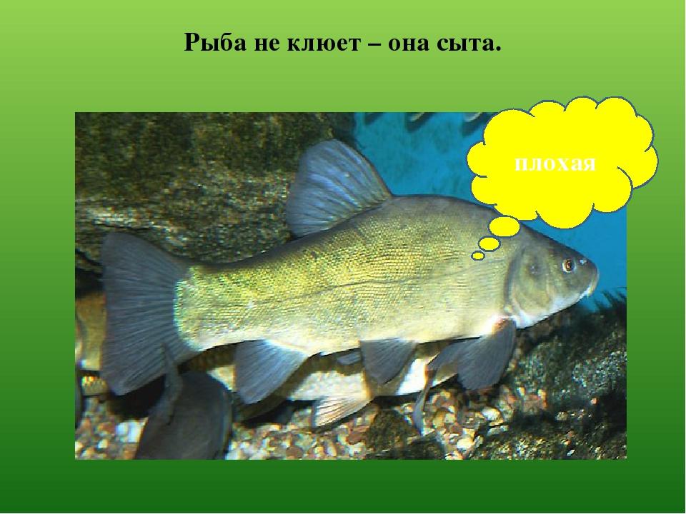 клюет рыба