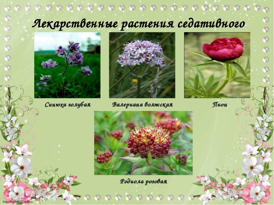 картинки с растениями брянской области представляет собой мягкую