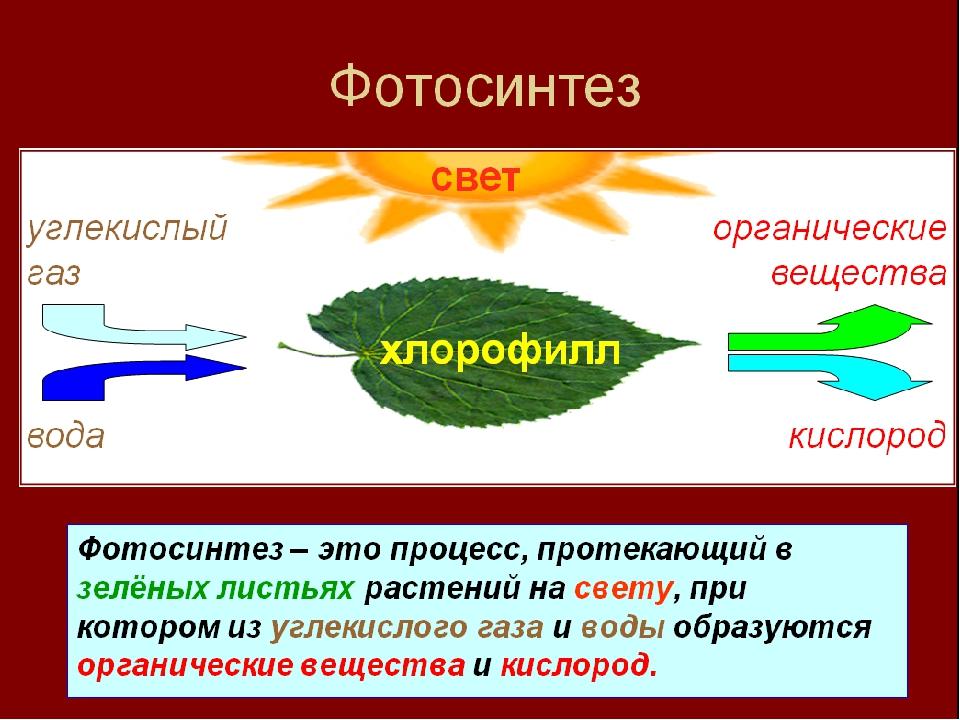 Фотосинтез процесс питания растений