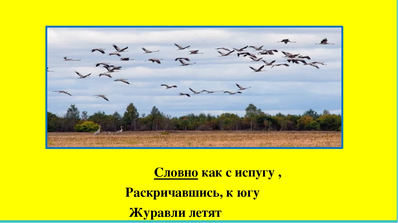 Словно как с испугу , Раскричавшись, к югу Журавли летят