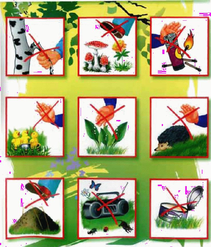 Материалы по природе в картинках