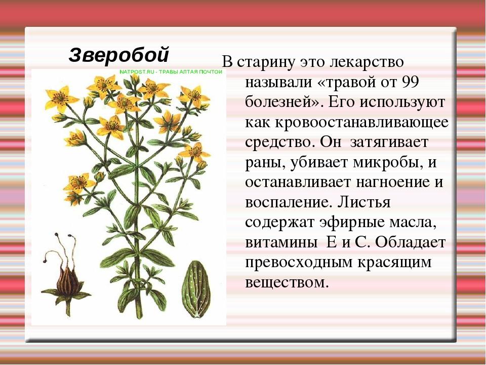 мы, пожалуй, доклад о растениях картинки самодельных конструкций