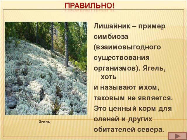 Ягель Лишайник – пример симбиоза (взаимовыгодного существования организмов)....