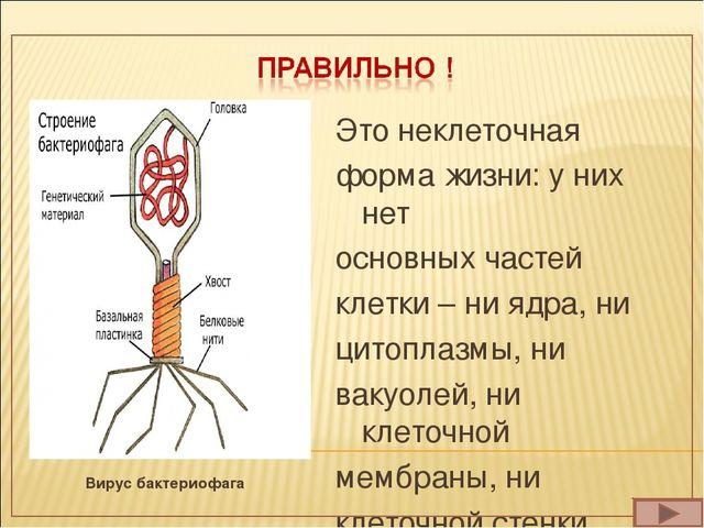 Вирус бактериофага Это неклеточная форма жизни: у них нет основных частей кле...