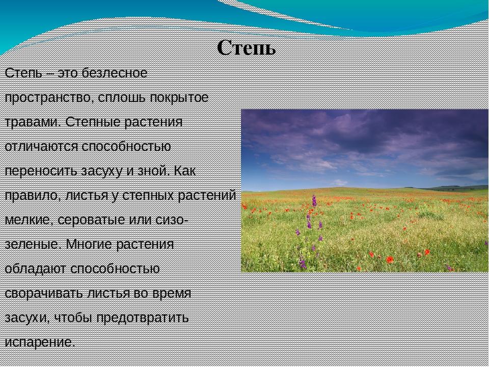 флора россии кратко пусть