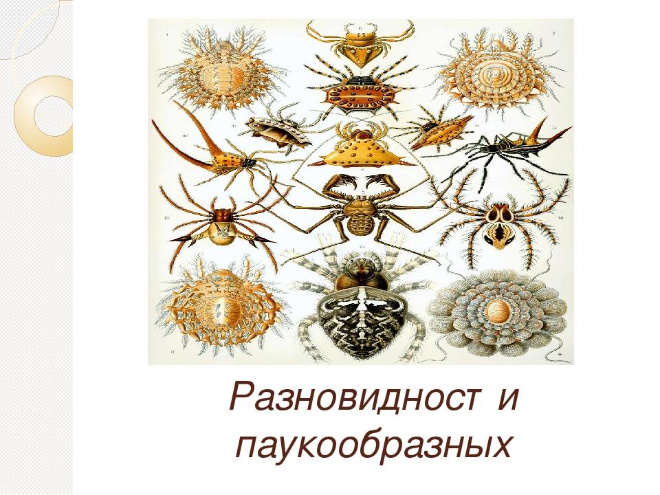 Разновидности паукообразных