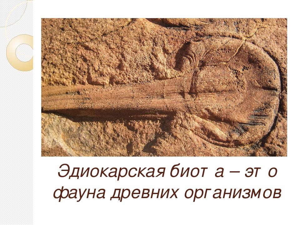 Эдиокарская биота – это фауна древних организмов