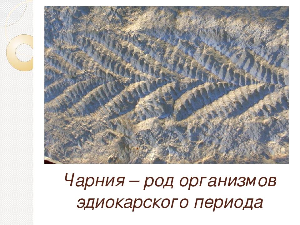 Чарния – род организмов эдиокарского периода